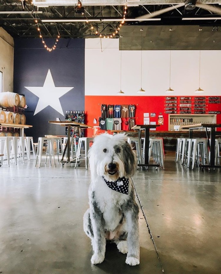These Five DFW Breweries are Dog-Friendly Inside