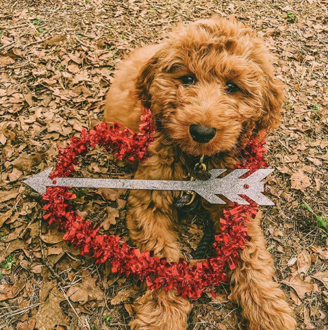 We are Crushing on These Seven DFWDogs