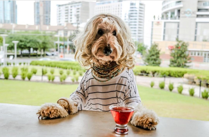 You Need to Try These Awesome, Dog-Friendly Happy Hours